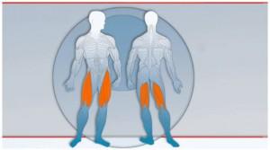 Beinstrecker und Beinbeuger