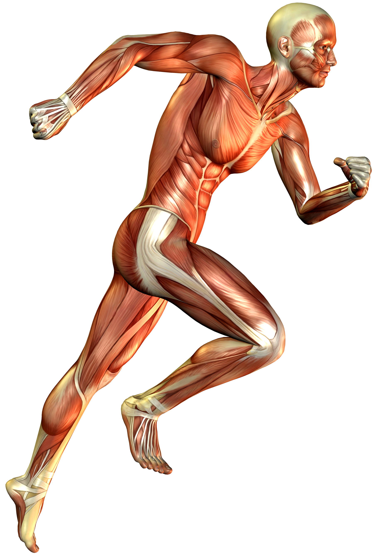 Muskelkater - Wenn der Muskel schmerzt... - Sport-Tiedje - Das ...
