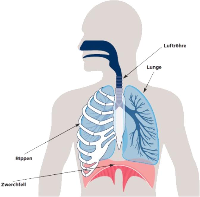 Leber zwickt die wenn Gallenkrebs bewirkt