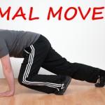 Fitness-Trend Animal Move – tierisch fit werden