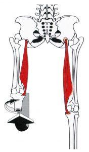 dehnen ischiocrurale muskulatur