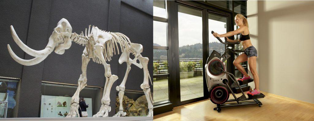 guter Grund für Fitness: Aussterben der Mammuts