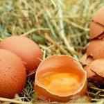 10 Fakten über Hühnereier als Proteinquelle für Sportler