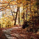 Fit durch den Herbst – diese Sportarten sind jetzt das Richtige